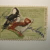 US Department of Interior Scott #RW35 $3 Hooded Mergansers Duck Stamp 1966, Used & Signed