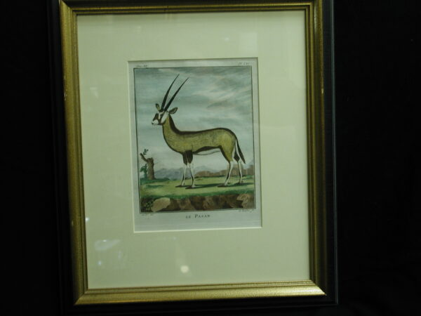 18th C. French Engraving hand colored Le Pasan Zoology framed Print