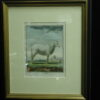 18th C. French Engraving hand colored La Brebis Zoology framed print