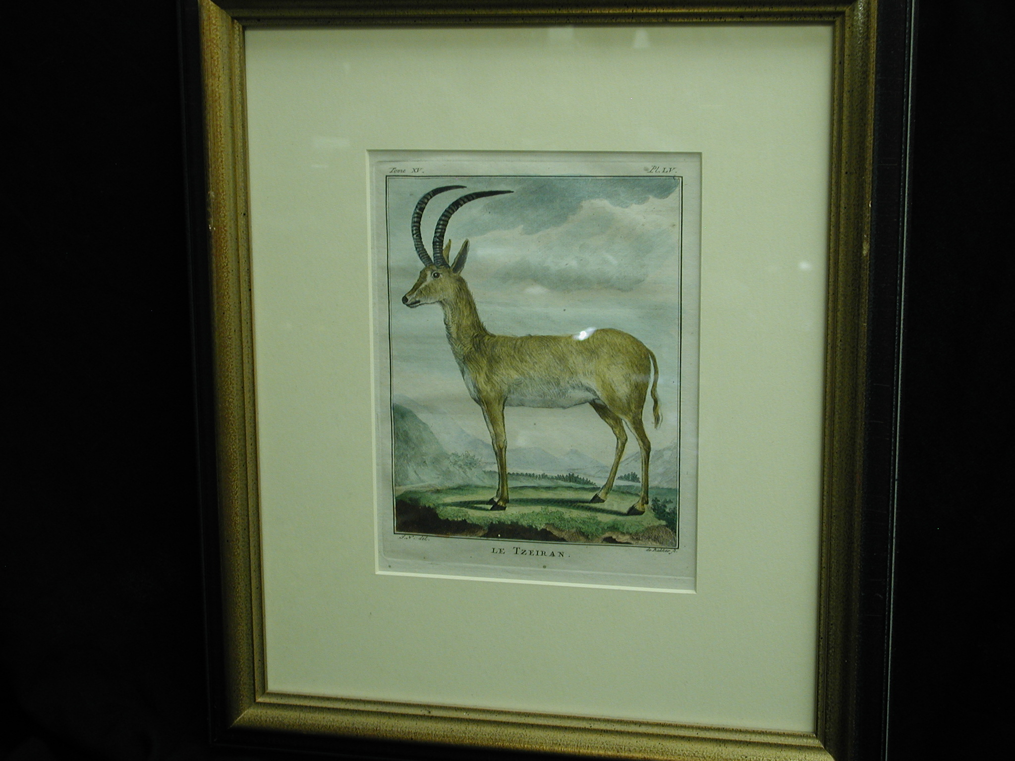 18th C. French Engraving hand colored Le Tzeiran Zoology framed Print
