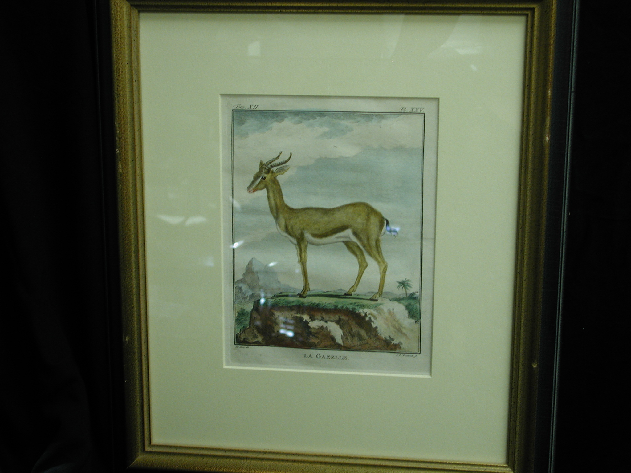 18th C. French Engraved hand colored La Gazelle Zoology Print CF Frietzsch