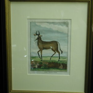 18th C. French Engraved hand colored NYL- Ghau Male Zoology Print